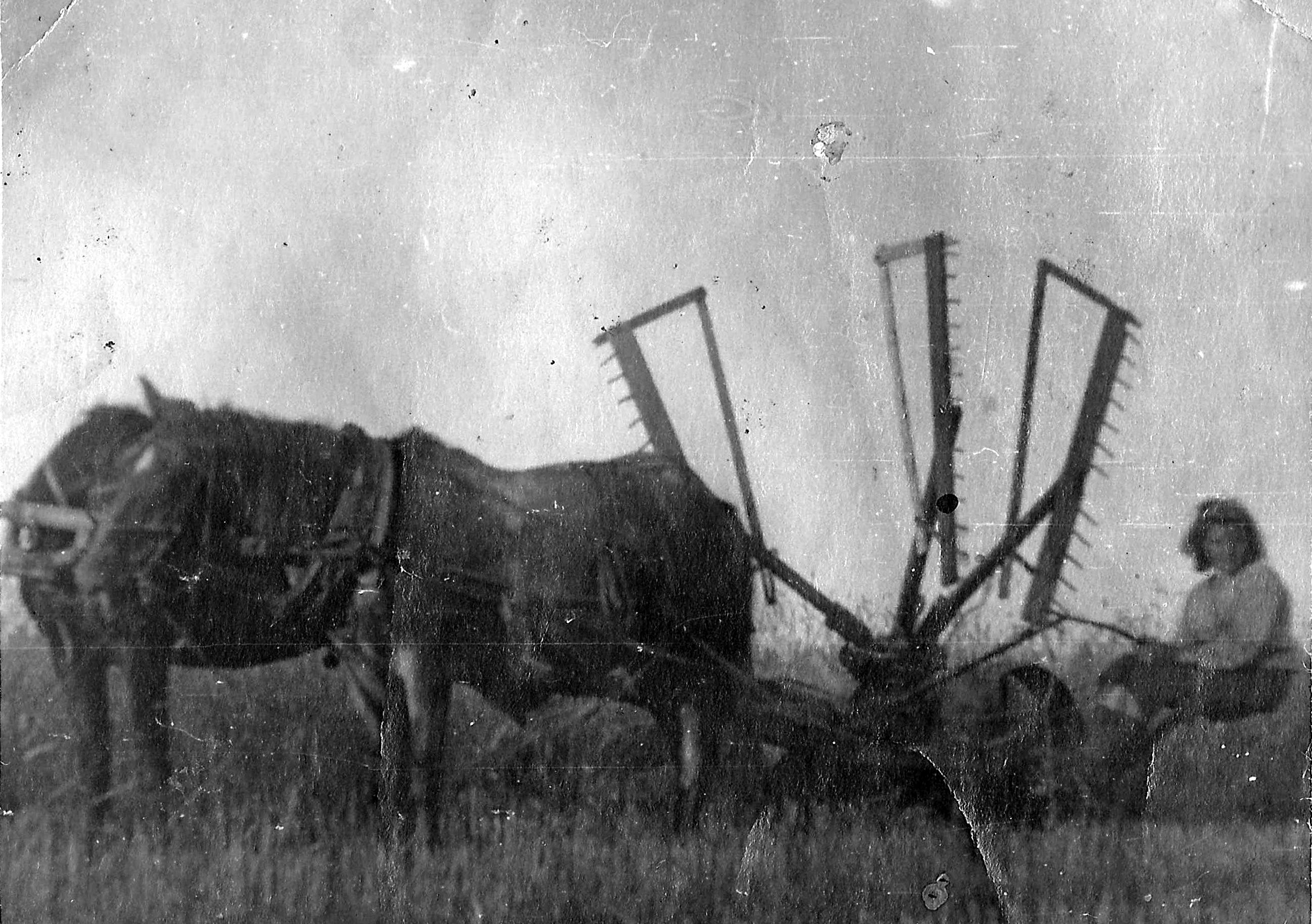 Колхозные будни.Жнейка. Фото из архива Петровской библиотеки.