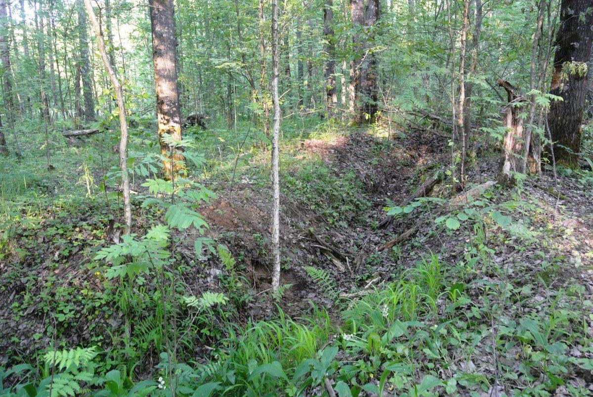 Старый окоп в лесу рядом с лагерем поисковиков, 20 июня 2016 года. фото Назаренковой Т.Н.